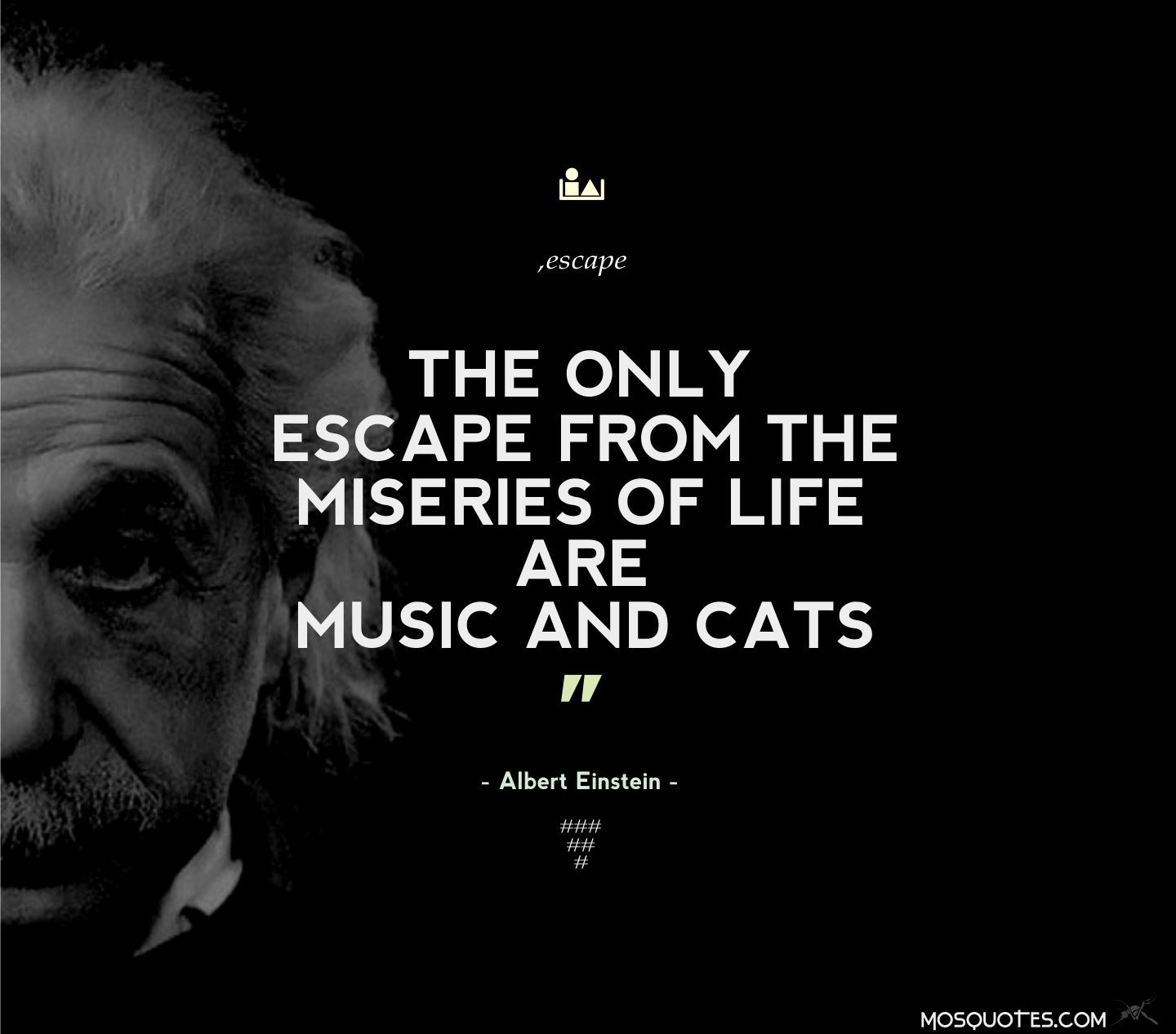 Albert Einstein Inspirational Funny Quotes The Only Escape From The Miseries Of Life Are Music And Cat Funny Inspirational Quotes Einstein Quotes People Quotes