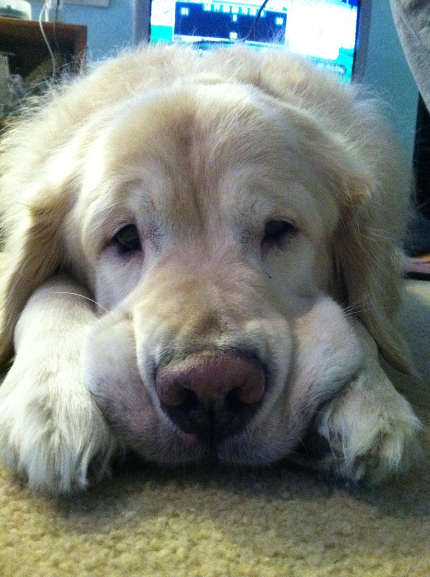 Simple Real Chubby Adorable Dog - b695b207e73380b5a3d6e1065cd37e5f  HD_469285  .jpg