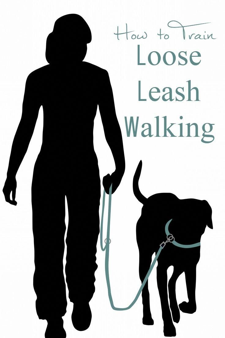How To Train Loose Leash Walking Dog Leash Leash Training Dog