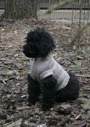 25+ trendy ideas crochet cat sweater pattern fit #dogcrochetedsweaters