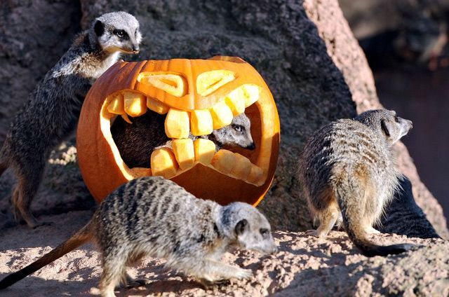 best halloween events in texas aboutcom family vacations halloween texas - Halloween Events In Texas
