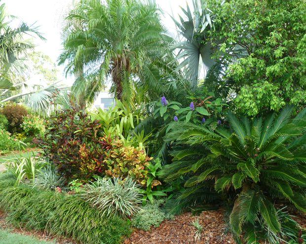 tropical small garden qld - Google Search | Tropical ...