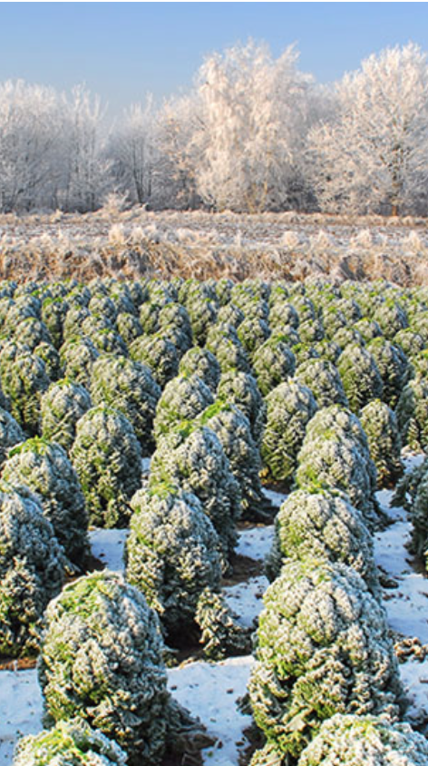 Grünkohl - die Vitaminbombe unter den Wintergemüsen - Kräuterkeller #proteinlunch