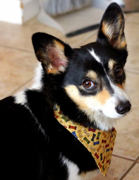 Dog over-the collar style bandana with cute by PuppyPawzBoutique