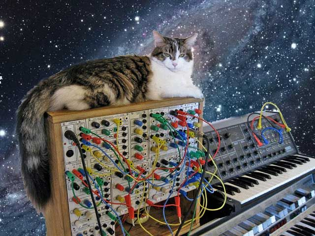 A cat on a modular synth.