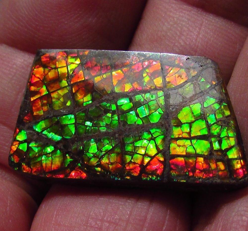 Ammonite ammolite Free-Form Canada Multi Color Bright Colors 16 x 27 x 4 mm