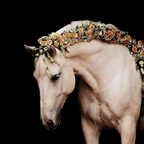 victory  equus horse . the north realm
