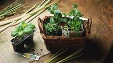 Extend the outdoor growing season with cold frames or mini-greenhouses, or nurture fruit-bearing plants under fluorescent lights indoors
