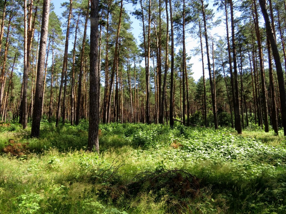 Canadian Forest Underbrush