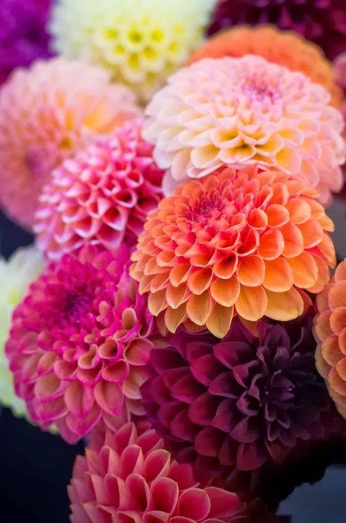 autumn brushstrokes (fresh hues )