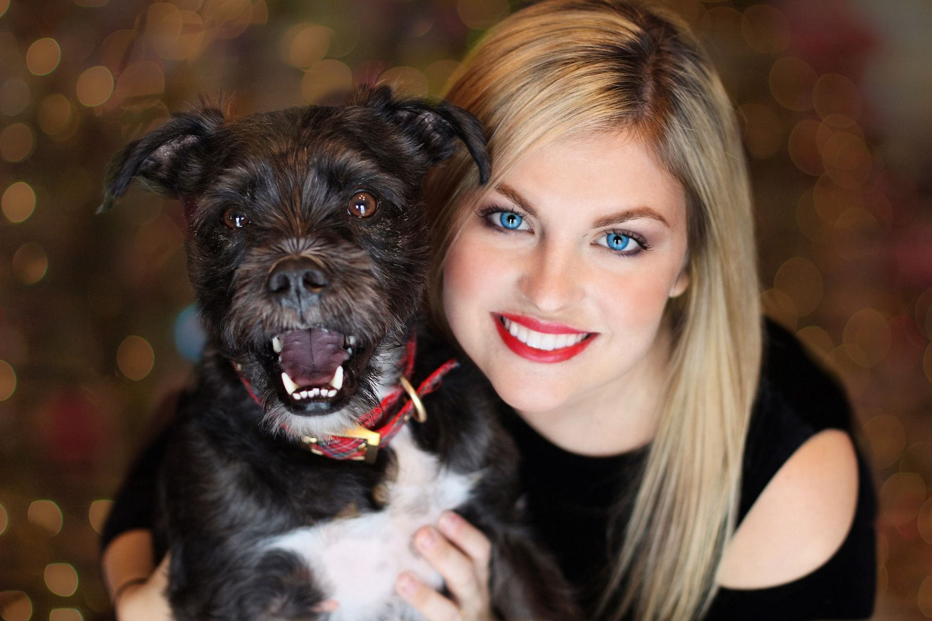 Petco App Will Pay You For Pet Selfies Animal Career Expert Training Your Dog Easiest Dogs To Train Dog Training