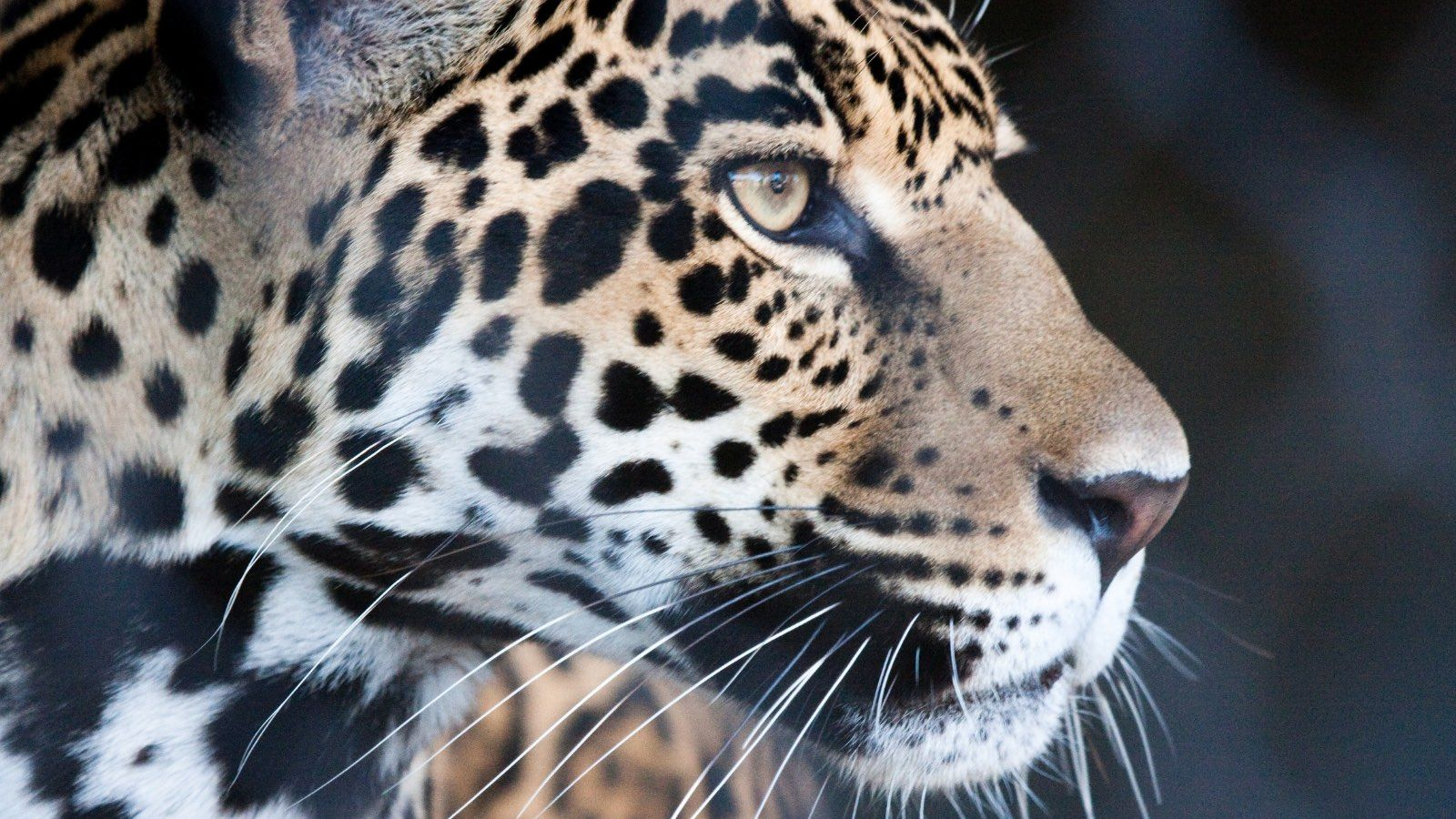 Founded At The First Earth Day With A Mission To Protect The Planet And All Of Us Who Live On It We Are Environmental Actio Deforestation Jaguars Animals Wild