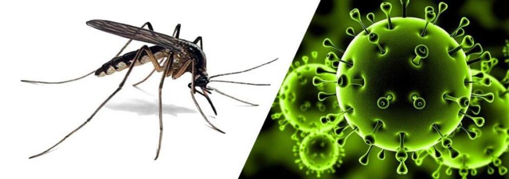 فيروس كورونا Pest Control