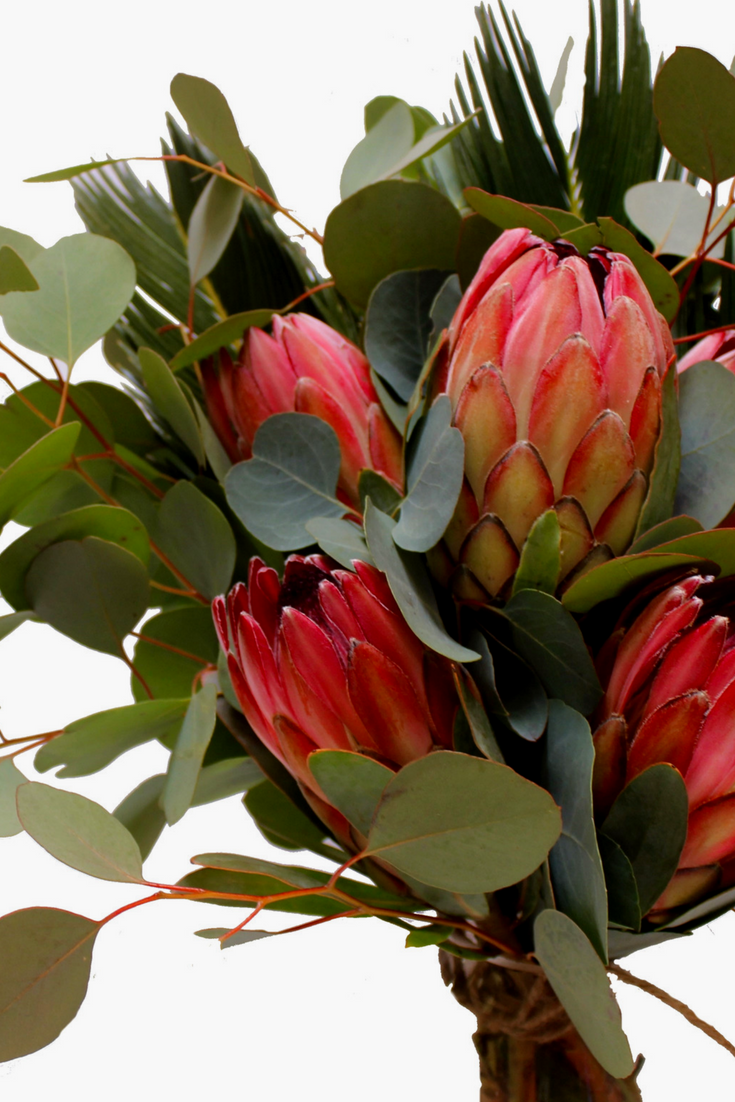 We Love Protea And Eucalyptus The Perfect Protea Bunch Features These Two Exactly Protea Flower Flowers K Protea Flower Protea Bouquet Protea Centerpiece