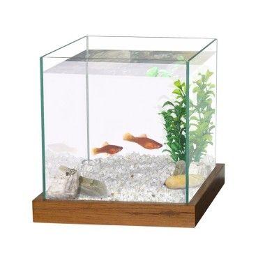 Aquarium Combattant 20x20x20 Cm Vol 8l Wenge Poisson Combattant Aquarium Combattant Aquarium Decoration