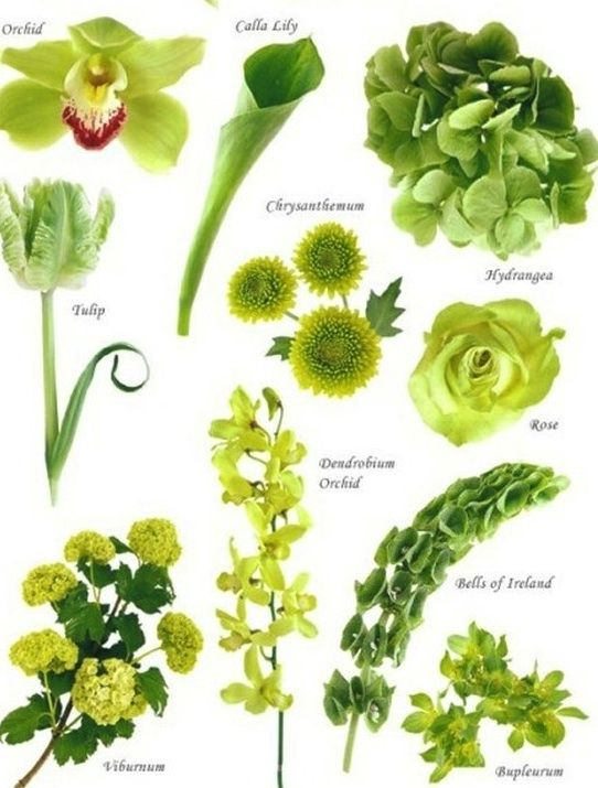 Flower names by Color | F l o w e r s . . . | Pinterest | Spring ...