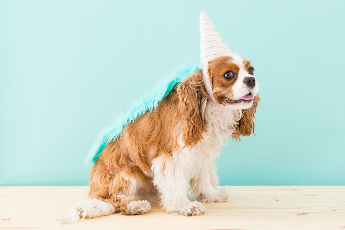 How To Make A Unicorn Costume For Your Dog This Halloween Dog