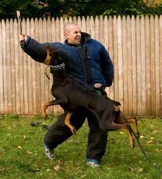 Dog Training How To Train An Attack Dog K9 1 Dog Training Style