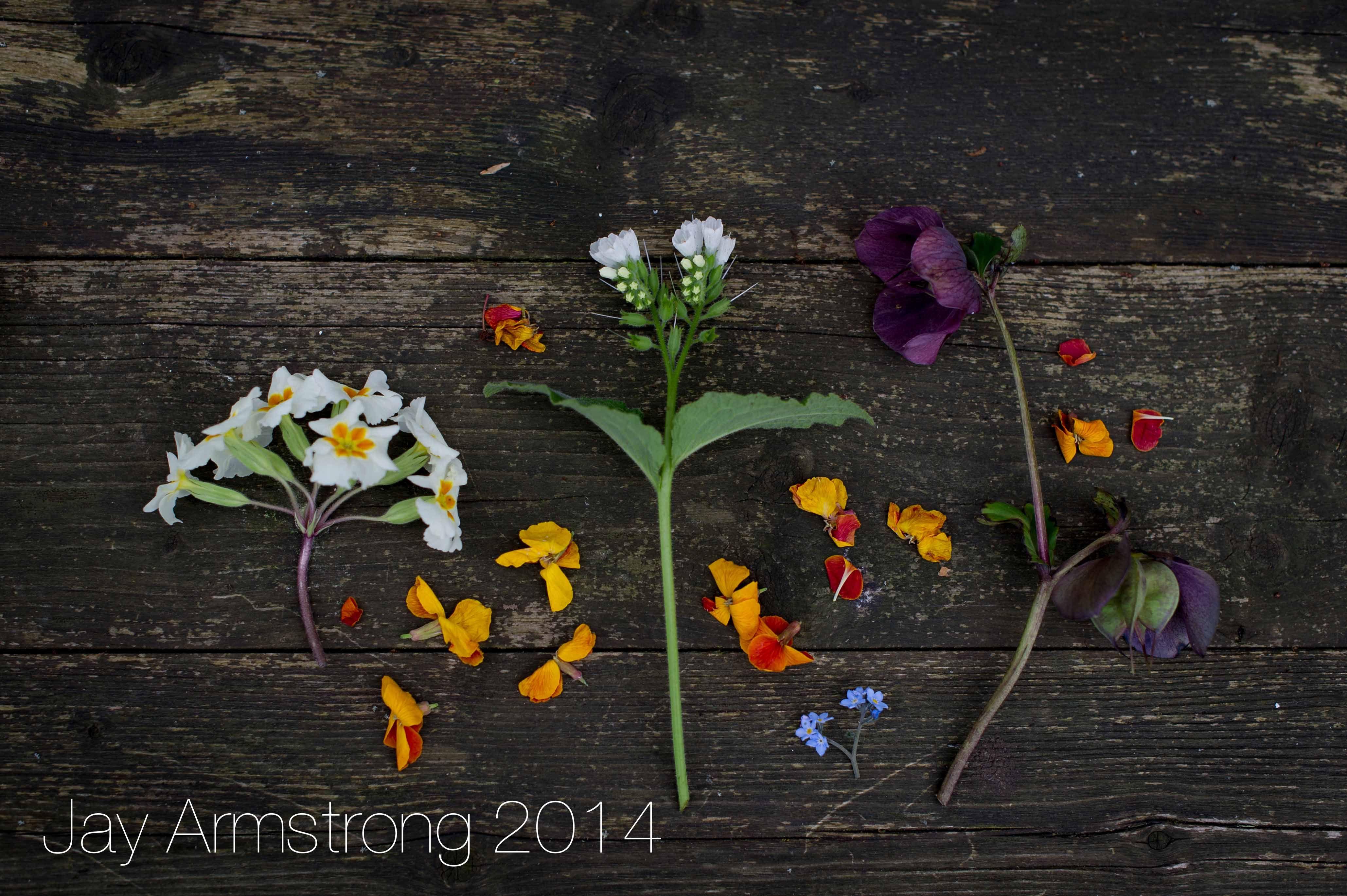 A Spring Montage Of Hellebore Primula Antirrinhum Snapdragon