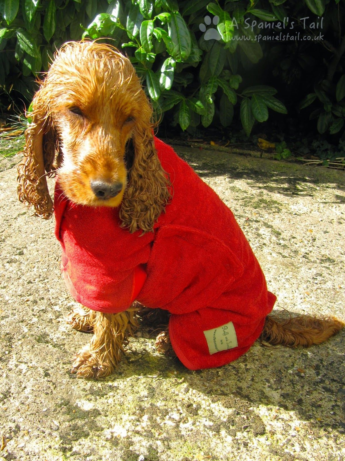Product Review Ruff & Tumble drying coat Spaniel