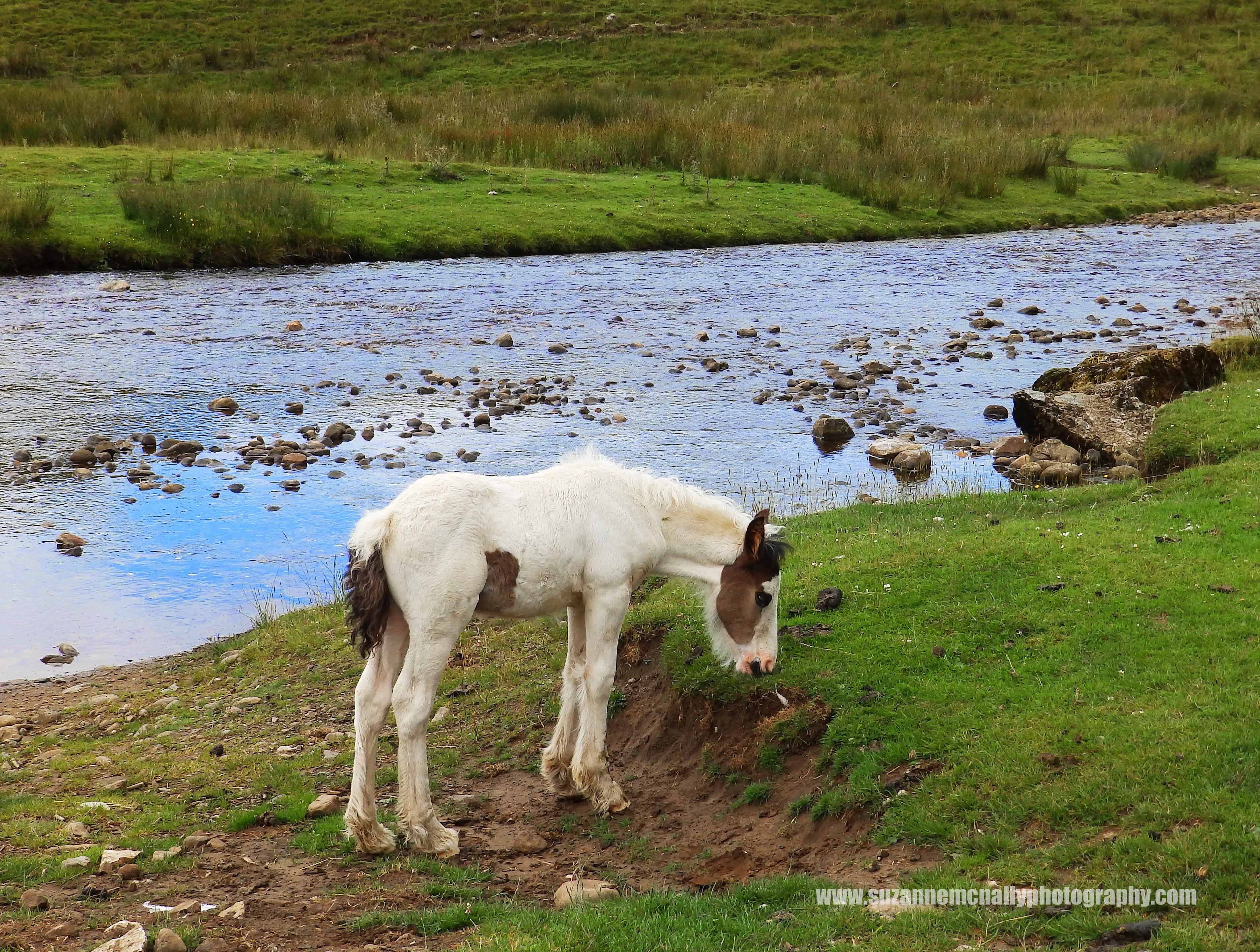 Mallerstang Foal by The River Eden