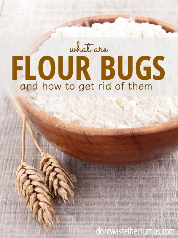 Flour Bugs | Food hacks, Food, Insects in flour - photo#12