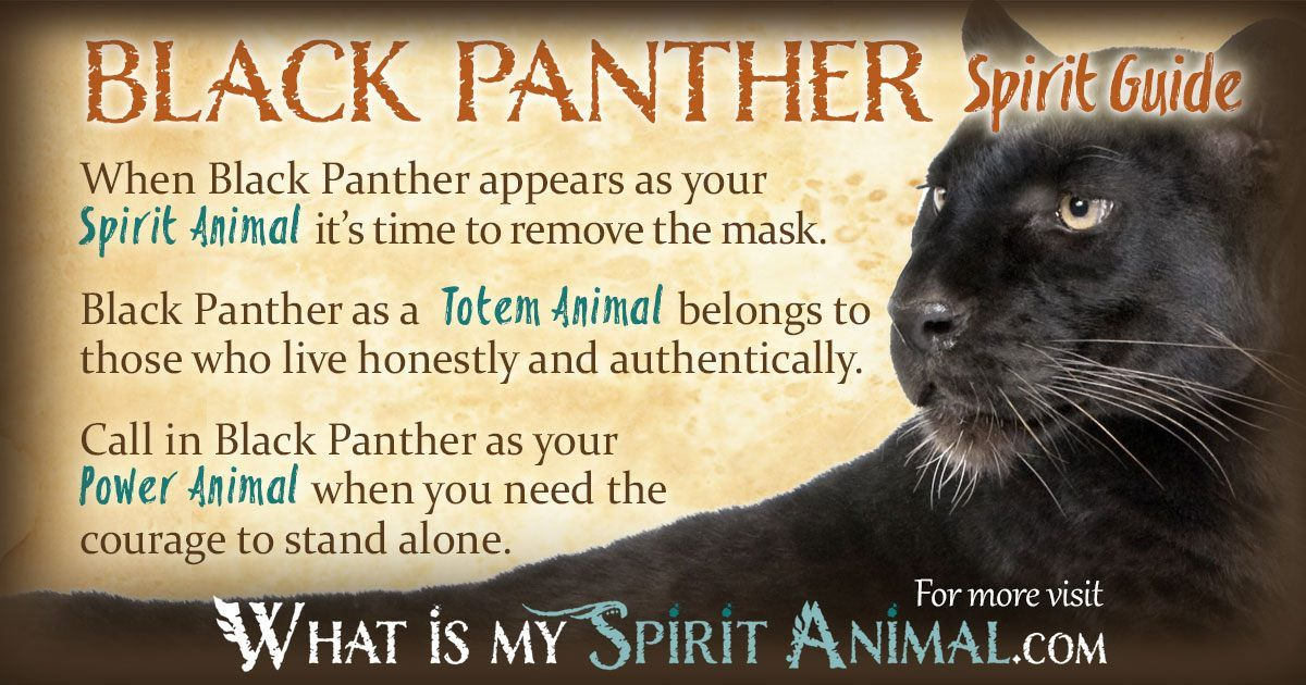 Black Panther Symbolism & Meaning Panther symbolism