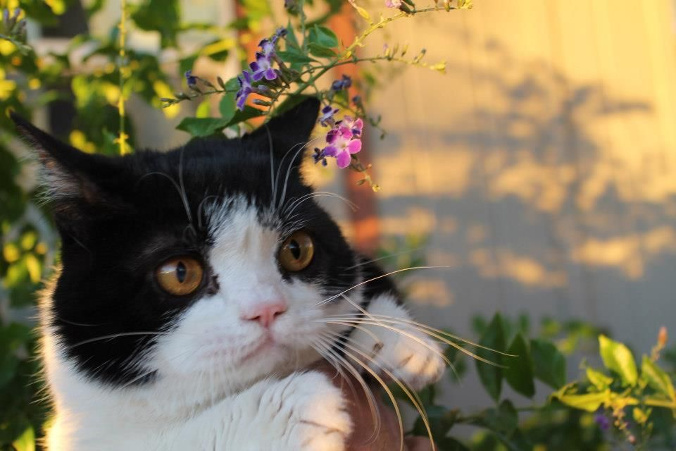 Pokey 3 Grumpy Cat Humor Grumpy Cat Crazy Cats