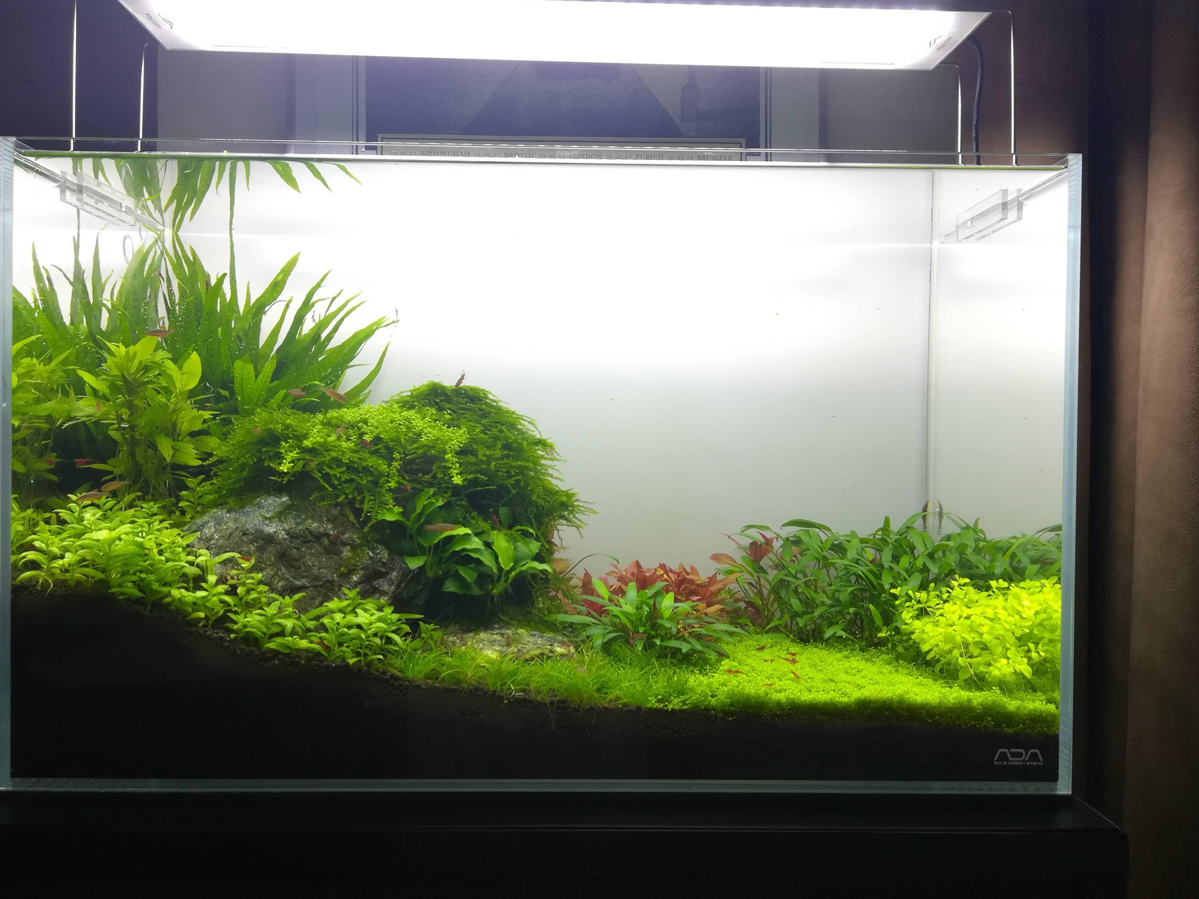My Glass Nature Box My Glass Nature Glass