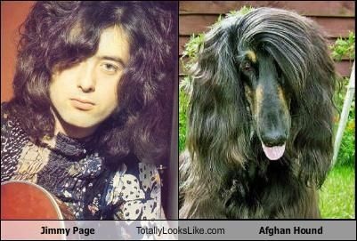 jimmy page totally looks like an afghan hound