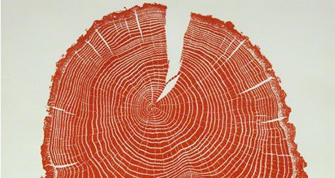 Connecticut-based artist Bryan Nash Gill uses ink to draw out the growth rings of a variety of tree species