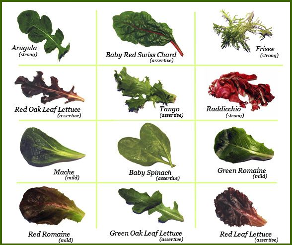 Types Of Greens Types Of Lettuce