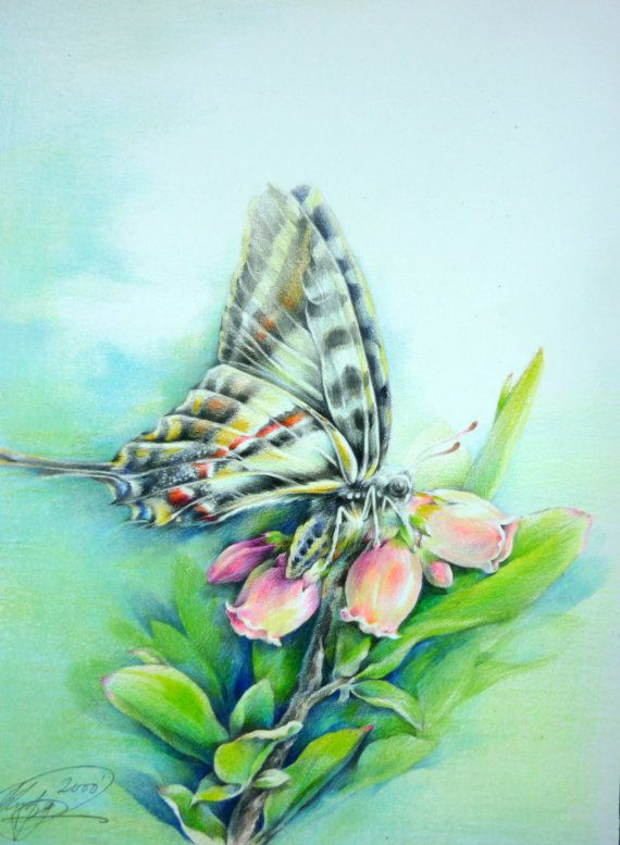 Original butterfly landing on flowers colored by paintingkim