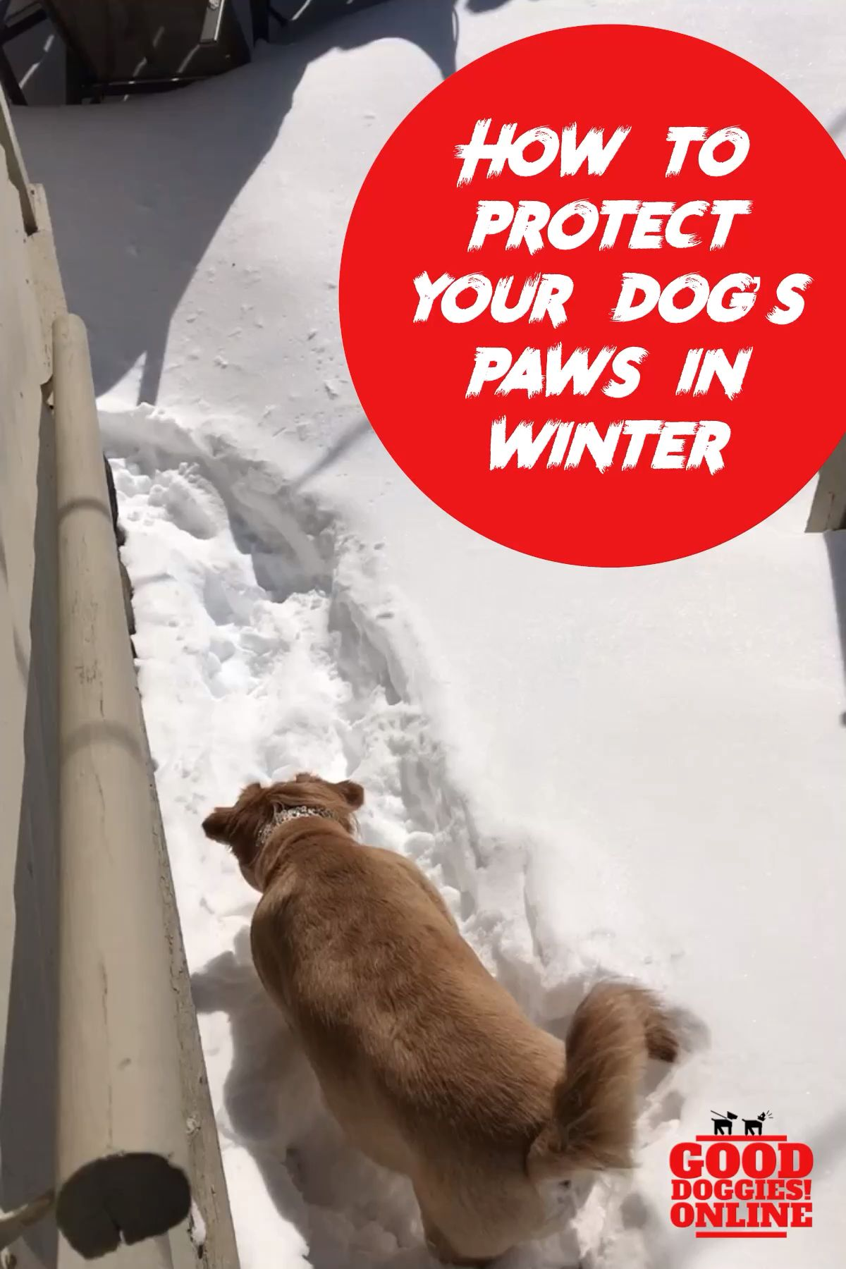 How To Protect Your Dog S Paws In The Winter Good Dog Info Dog