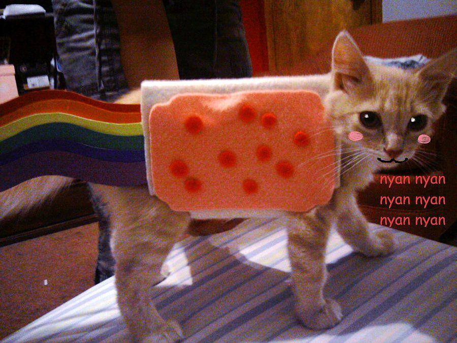 nyan cat pet costume halloween - Halloween Costumes For Kittens Pets