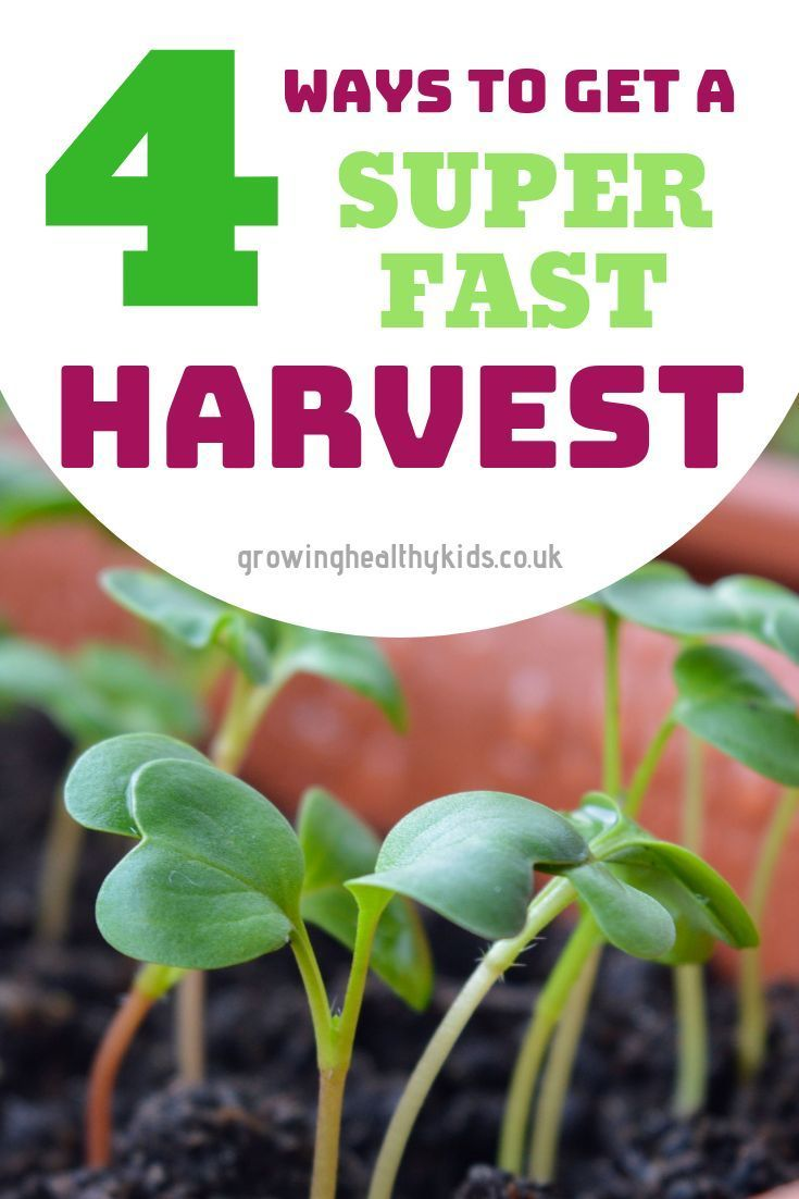 simple ways to grow food super fast and almost free.