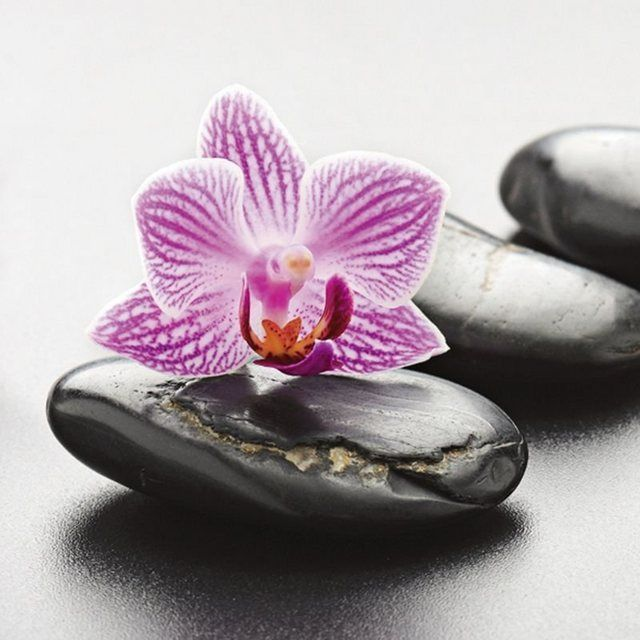 Glass picture scorpp Spa concept with Zen stones and orchid  Products