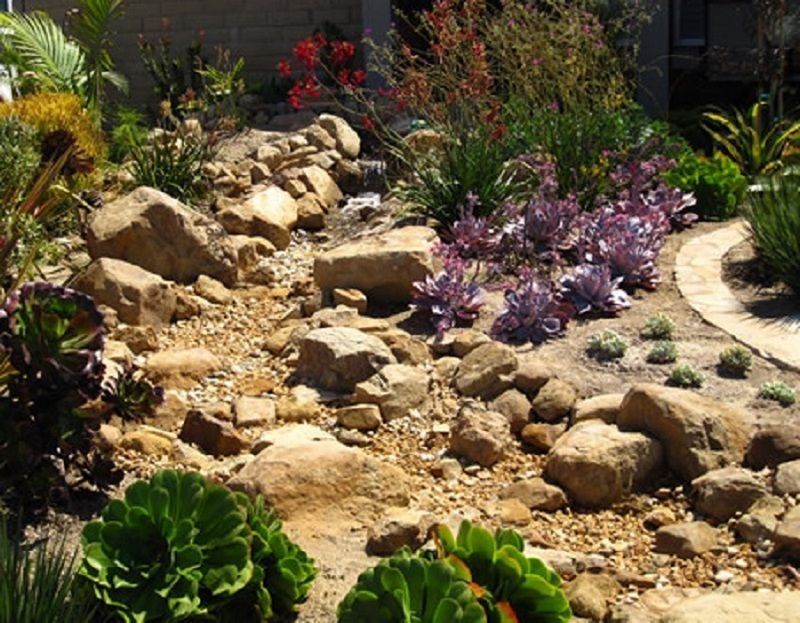 Heres another dry creek garden planted with succulents to