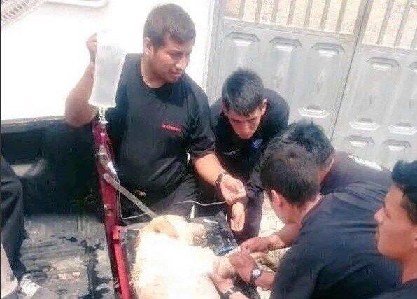 Dayko, el perro que dio su vida para salvar a siete personas en Ecuador