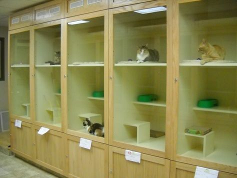 Humane Society Of The High Plains Cat Condos I Like How Roomy They Are Cat Hotel Cat Kennel Cat Condo