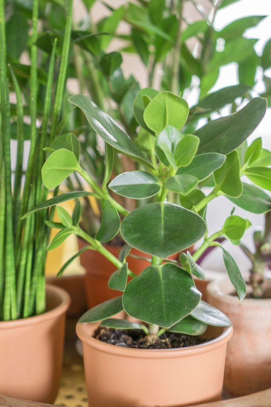 Rosliny Dla Leniwych Czyli Kwiaty Ktore Trudno Usmiercic Polenka House Plants Plants Garden