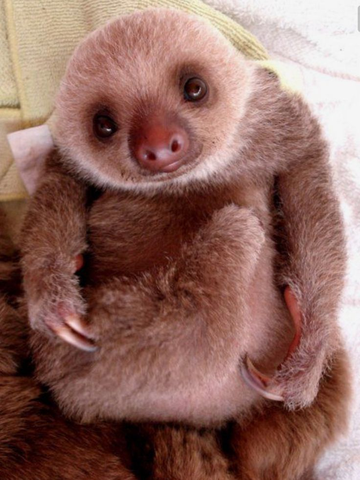 I just want to hug this little guy