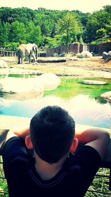 Dom watching the elephants