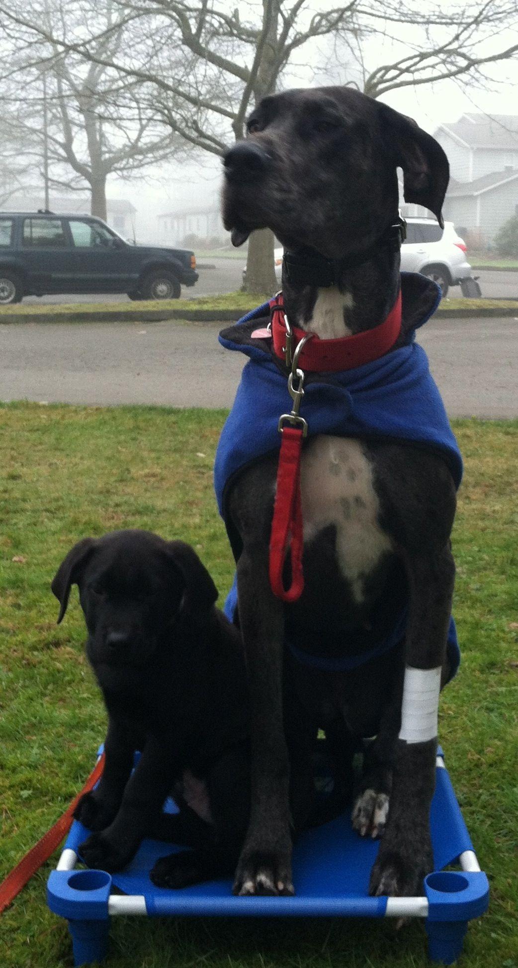 Ruby Doo And Romeo 3 Dog Training Professional Dog Training Dogs