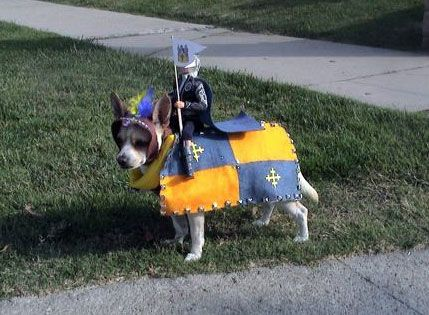 Dog Costume As A Knight Riding This Fine Dog As His Steed Cute