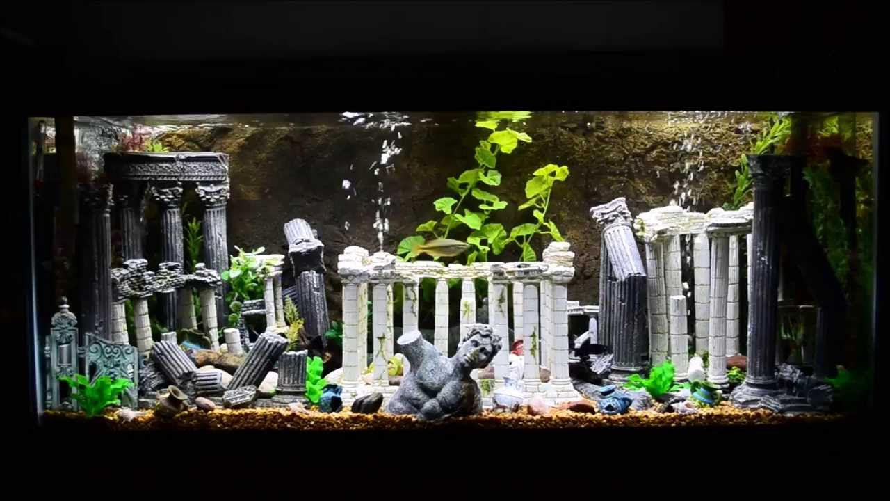 75 Gallon Roman Themed Aquarium With A Rock Background
