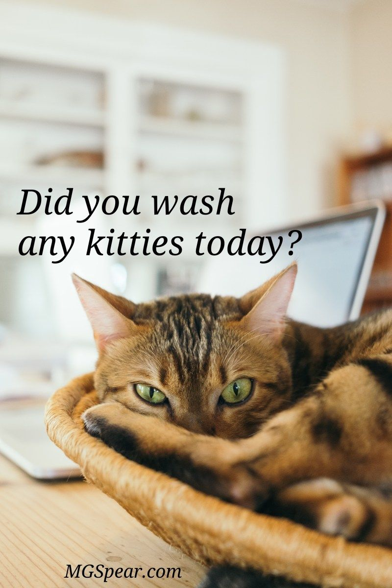 91 Washing Cats Mgspear Cats Cat Care Cat Questions