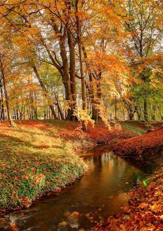 Resplendent Reverie #autumnscenery Resplendent Reverie #autumnscenes