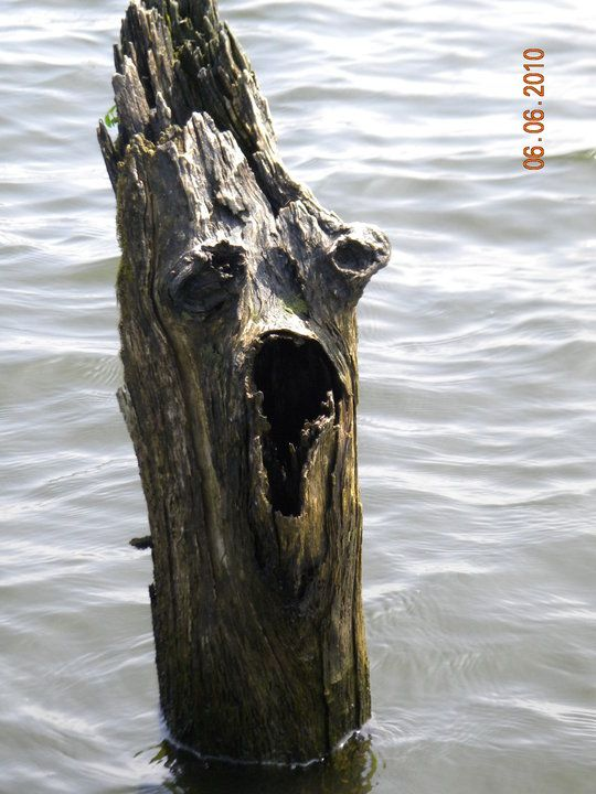 a spooky looking stump I came upon on Toledo Bend