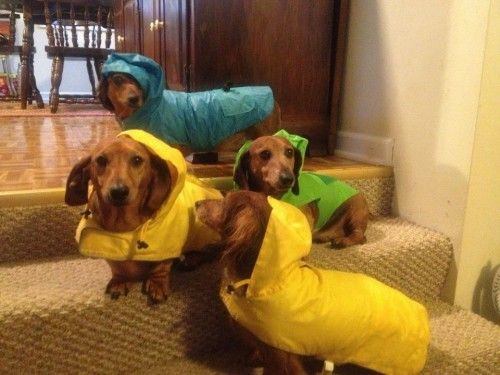 From: 23 Must-Have Dogs on DormStormer